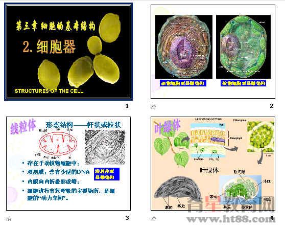 细胞器——系统内的分工合作ppt