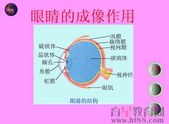 眼睛的成像作用flash课件