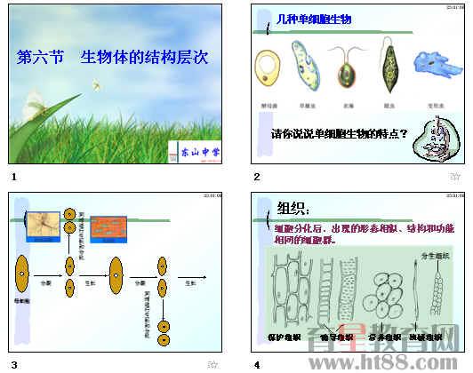 生物体的结构层次ppt1