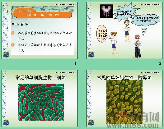 共19张,通过草履虫等讲述了单细胞生物的形态结构和生命活动特点,及