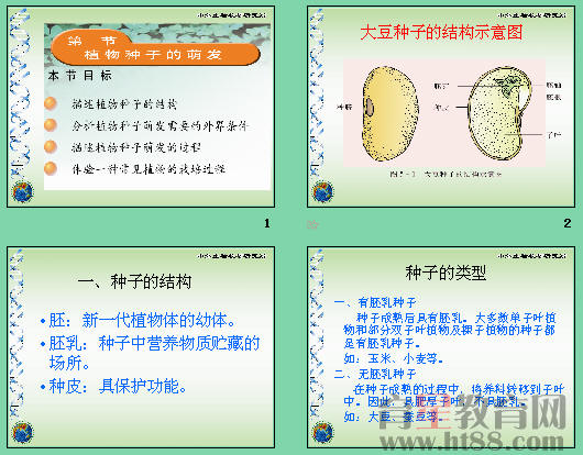 讲述了双子叶植物和单子叶植物的