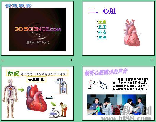 人体内物质的运输 心脏ppt