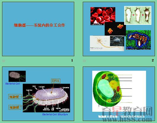 《细胞器——系统内的分工合作》ppt32