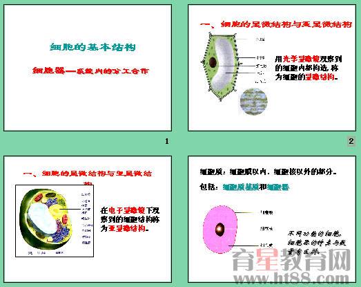 本课件讲述了细胞的显微结构和亚显微结构