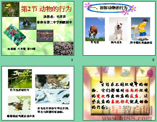 《动物的行为》ppt6