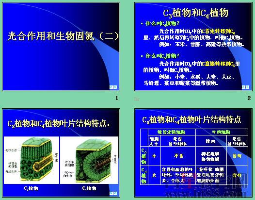 育星教育网 www.ht88.com《光合作用和生物固氮》ppt