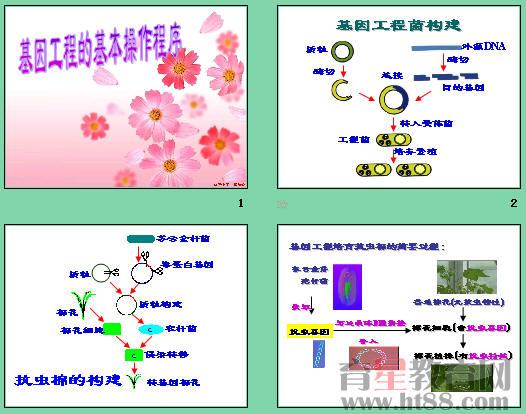 基因工程的基本操作程序ppt14