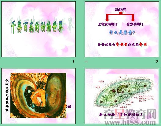 介绍了动物的分类