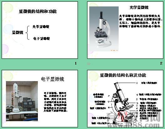 显微镜的结构和功能ppt