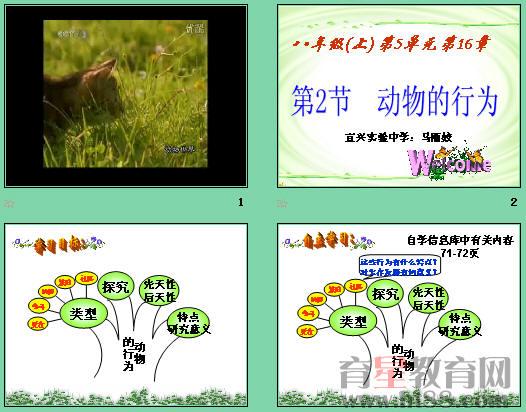 共12张,另有约2110字的教案和动物世界.wmv视频素材一个。   动物的行为   宜兴实验中学 马丽姣   教学目标   1、 知识目标   (1)说出动物行为有哪些类型以及对动物所起的作用。   (2)学会探究动物行为的方法。   (3)举例说出动物的各种行为。   2、 能力目标   (1)通过对蚂蚁觅食行为的探究方案的设计,锻炼学生进行科学研究素质的能力。   (2)逐步培养学生小组合作以及表达交流的能力。   3、情感态度与价值观目标   (1)认识到自然界中动物是人类的朋友,只有人类和动物