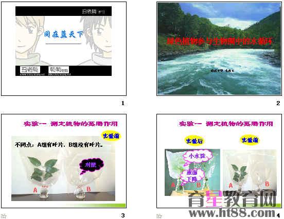 绿色植物参与生物圈中的水循环 ppt