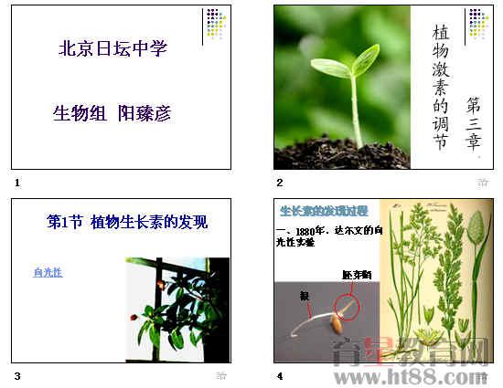 植物的激素调节图片_植物的激素调节图片大全