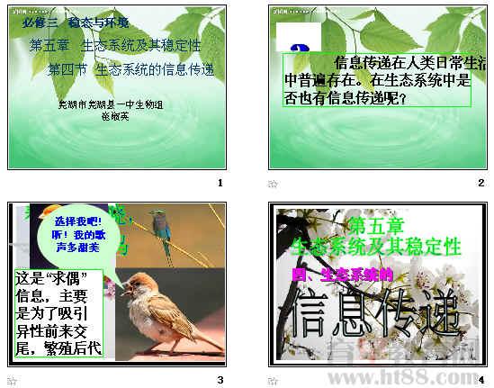 生态系统的信息传递ppt7