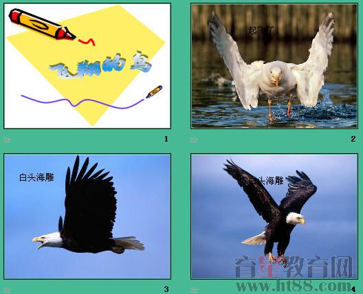 空中飞行的动物ppt3 人教版