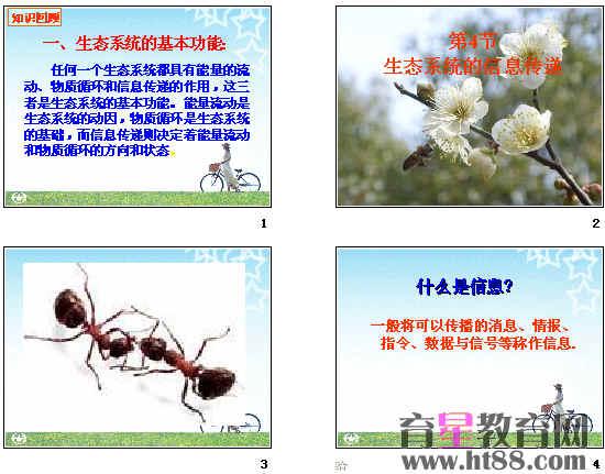 生态系统的信息传递ppt6