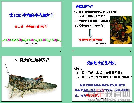 动物的生殖和发育ppt1