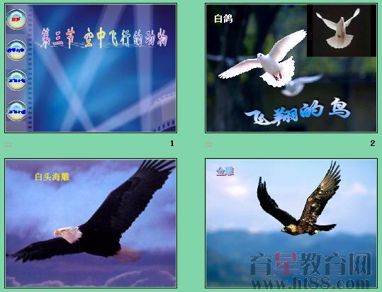 空中飞行的动物ppt4 人教版