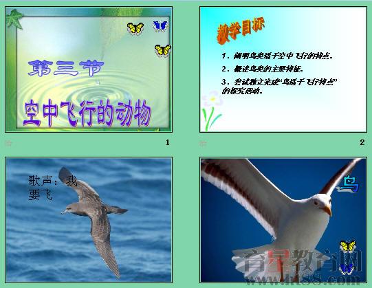 空中飞行的动物ppt5 人教版