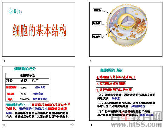 细胞的基本结构ppt15 人教课标版