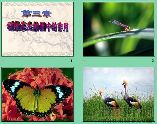 《动物在自然界中的作用》ppt8