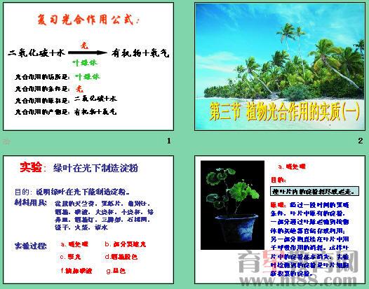 包括植物光合作用的实质(一)和植物光合作用的实质(二)两个课件,另有产生氧气等4个flash素材,一个约2000字的文字素材。   资料6-15 光合作用的产物   大多数植物的光合作用产物为淀粉,但芭蕉科植物的绿色细胞中不含淀粉而含油类,其他多数单子叶植物的光合作用只产生糖类。   光合作用的直接生成物因种而异,大多数情况下为糖类,有的为多聚糖(淀粉),有的为双糖(蔗糖),也有的为单糖(葡萄糖和果糖)。至于单糖中葡萄糖与果糖哪种为直接生成物,还有争论;当前大多数学者都赞同葡萄糖为直接生成物的学说。产生