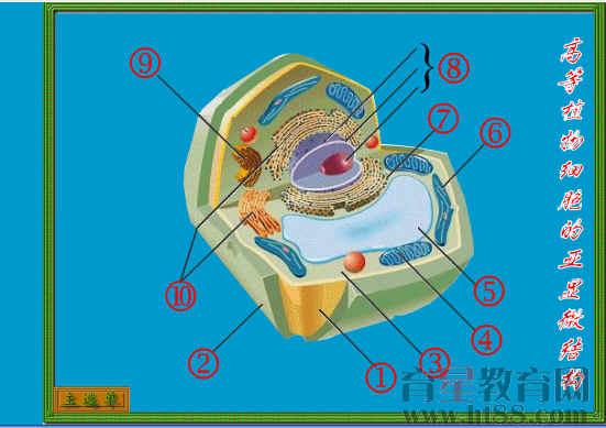 答:动物细胞和植物细胞都有的结构是细胞膜,细胞质和细胞核;细胞质中