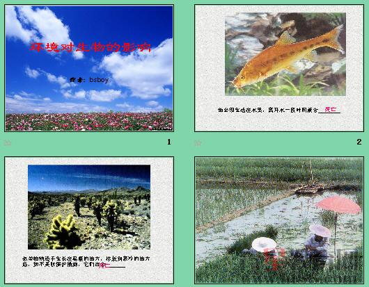 环境对生物的影响ppt12