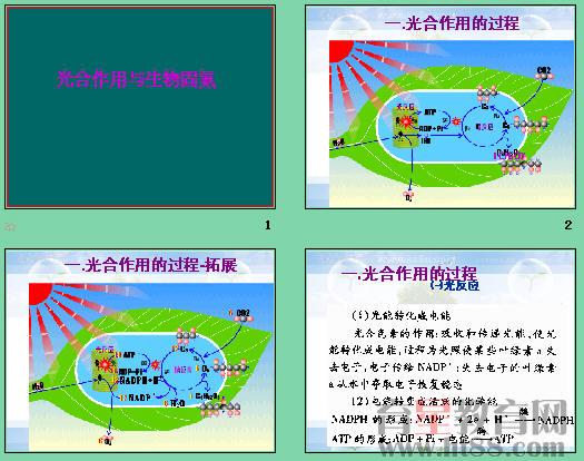 育星教育网 www.ht88.com《光合作用与生物固氮》ppt4