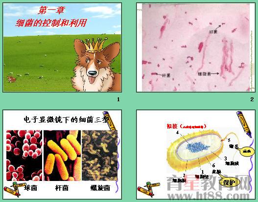 课件讲述了细菌的形态