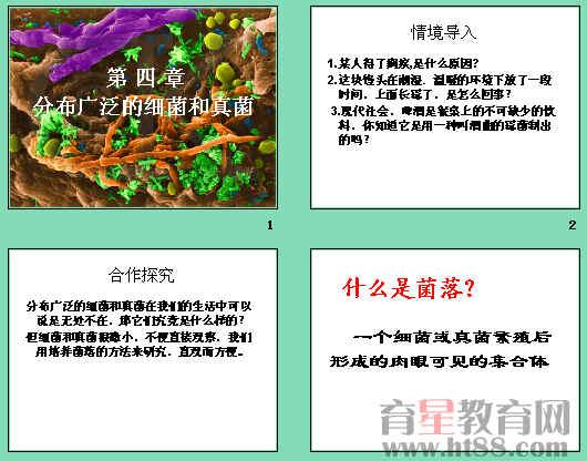 初二年级生物细菌真菌结构图