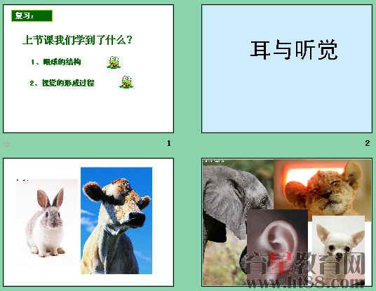 课件讲述了耳的结构和功能