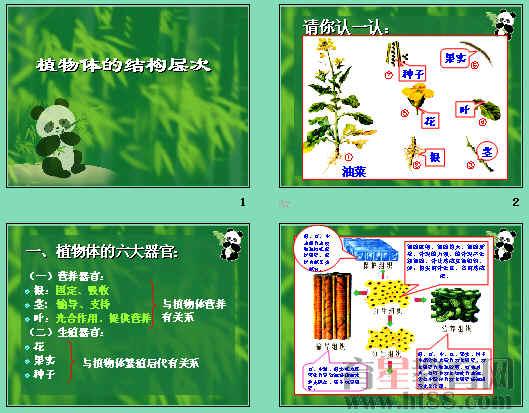 植物体的结构层次ppt9