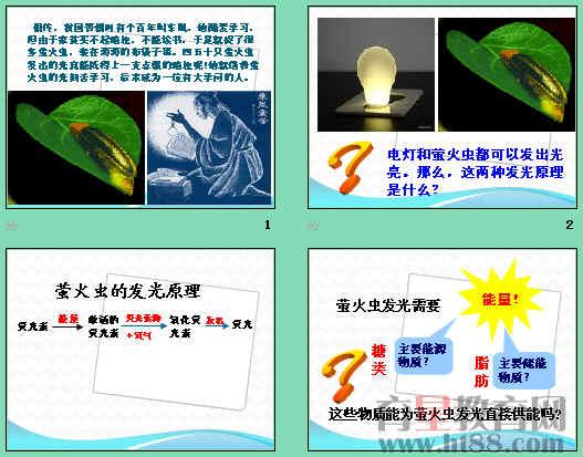 课件通过探究萤火虫的发光原理和药品