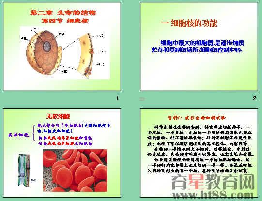 高一生物必修一原核细胞和真核细胞必备知识