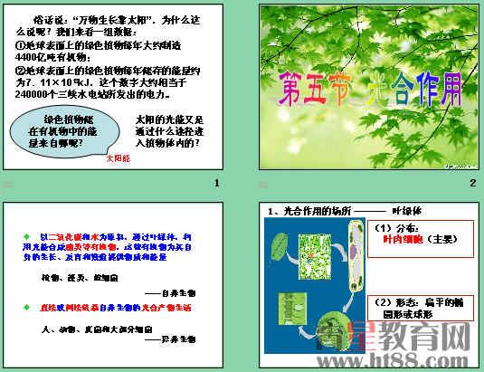 光合作用ppt63 浙科版