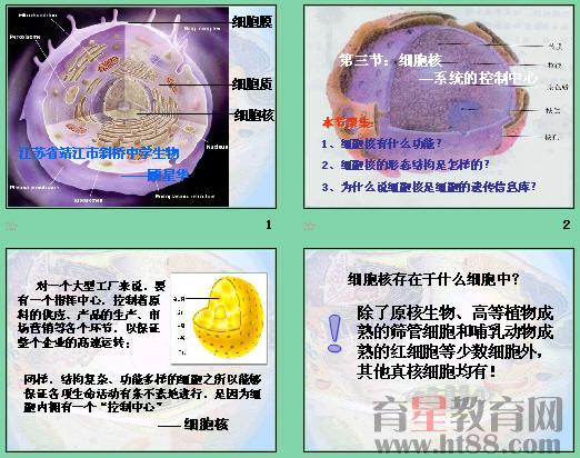 讲述了细胞核的结构,通过实验分析了细胞核的功能