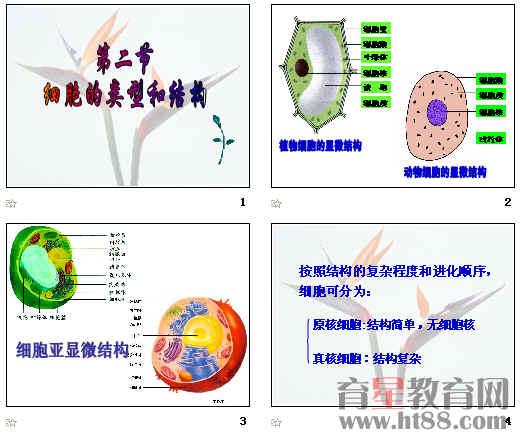 分析真核细胞结构模式图