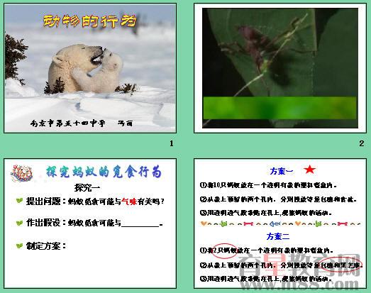 幻灯片保护动物素材