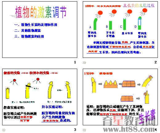 植物激素调节ppt1 北师大版