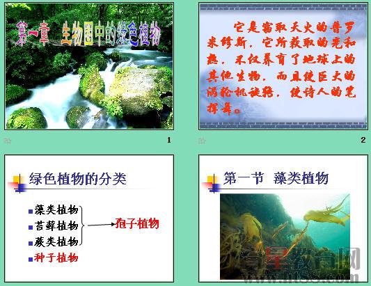 藻类植物ppt 人教版