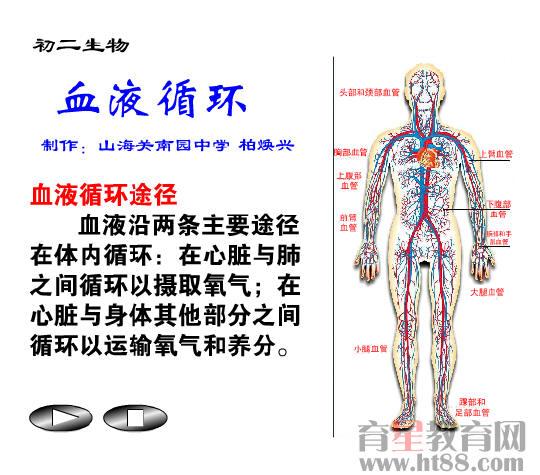 育星教育网 www.ht88.com《血液循环》flash课件1