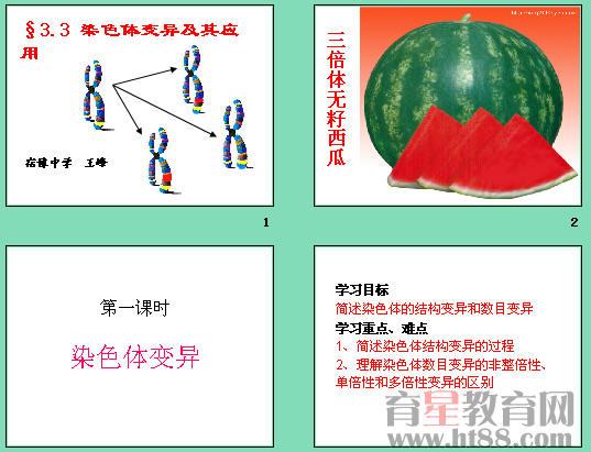 课件讲述了染色体结构变异的过程及染色体数目变异的