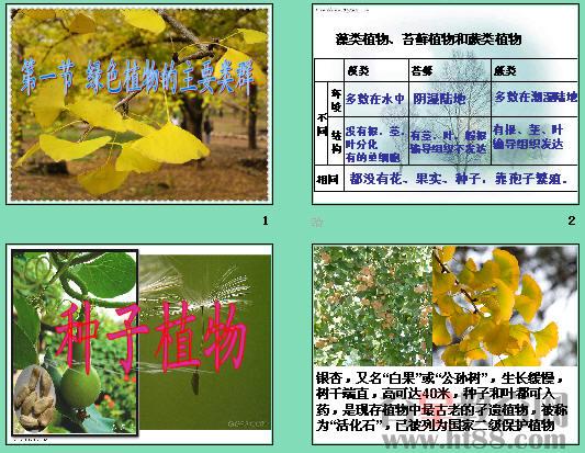 绿色植物的主要类群ppt4