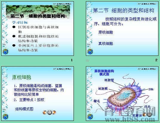 课件讲述了真核细胞和原核细胞的区别