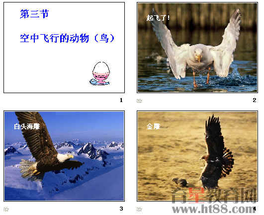 空中飞行的动物ppt18 人教版