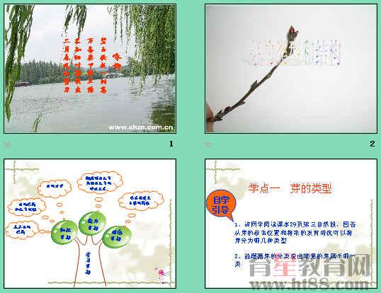 芽的结构和发育过程及木本茎的结构