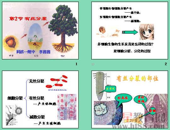 讲述了有丝分裂的过程,并比较了动,植物细胞有丝分裂有异同,分析了