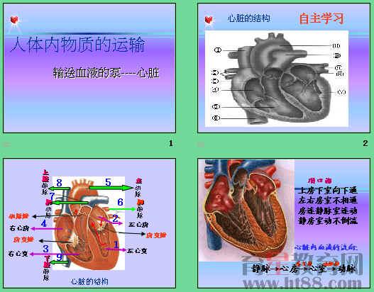 课件讲述了心脏的结构