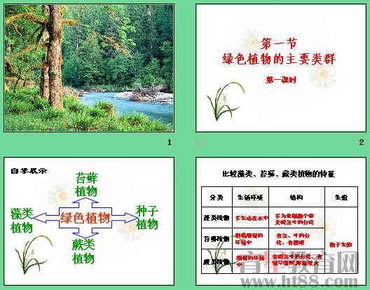 植物小报ppt_植物小报ppt分享展示