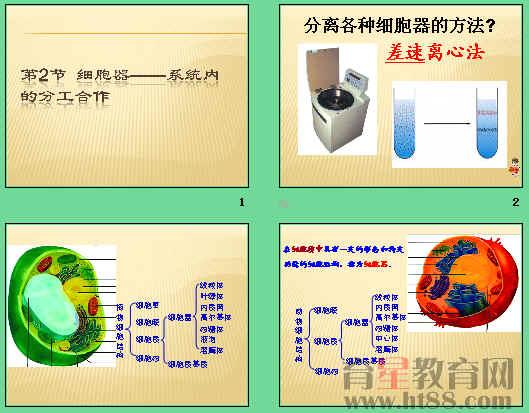 《细胞器——系统内的分工合作》ppt53
